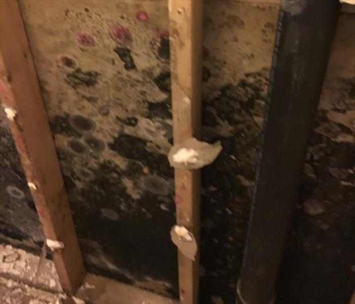 Destroyed Bathroom Wall from Mold