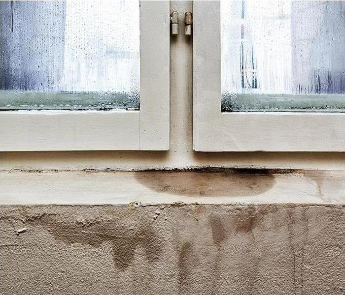 Mold Remediation Does Your Wilson County Home Have A Mold Problem?