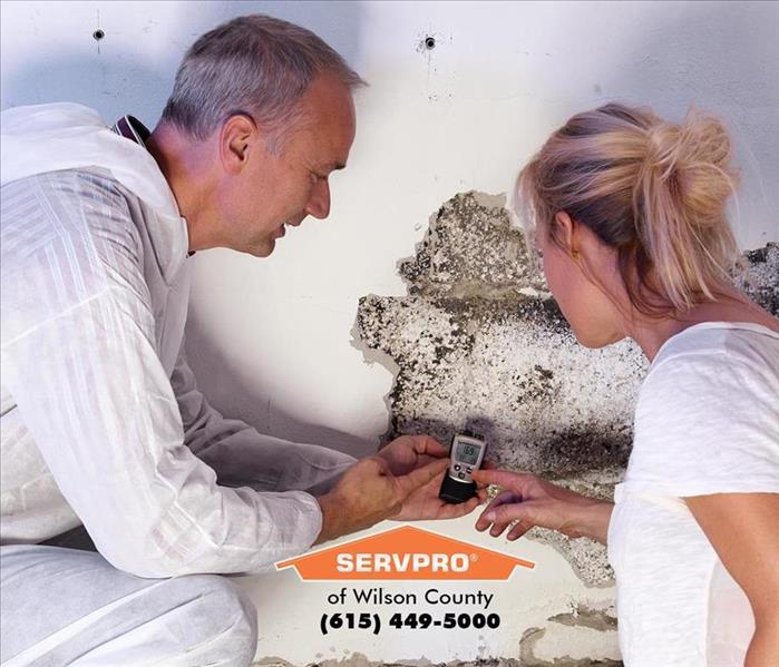 Mold Remediation Mold Remediation vs Mold Removal