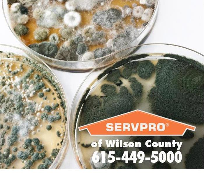 Mold Remediation Mold Remediation and the EPA