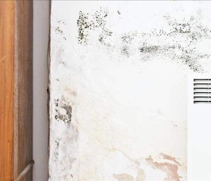 Mold Remediation SERVPRO - Lebanon Mold Damage