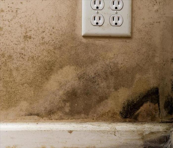 Mold Remediation Treating Mold Damage on Lebanon Furnitures
