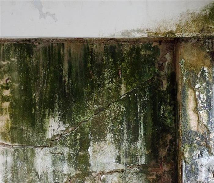 Mold Remediation SERVPRO Mold Damage Watertown